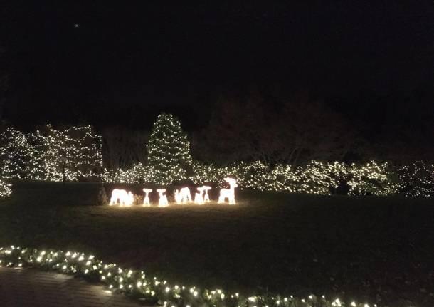 Foto Di Luci Di Natale.Dieci Chilometri Di Luci Per La Casa Di Natale Nel Bosco