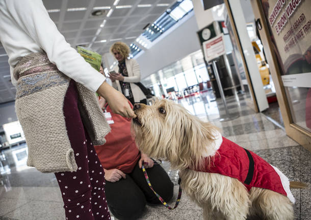 La Pet Therapy sbarca a Malpensa