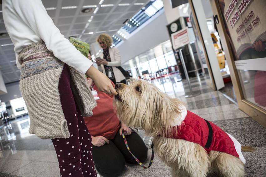 La Pet Therapy sbarca a Malpensa