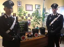 marijuana carabinieri castellanza