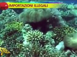 Pietro Romano coralli