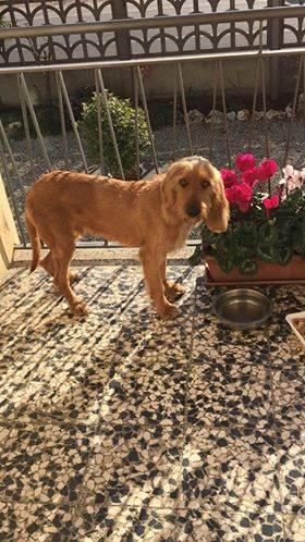 Ritrovato cane a Fagnano