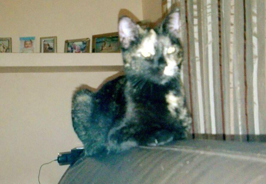 skin gatto nero samarate