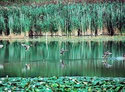 Bisuschio, il laghetto Cicogna - Foto di Matteo Nicora