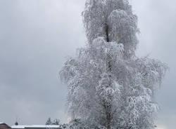 prima neve 2017