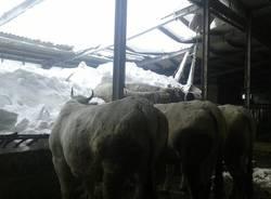 Il dramma degli animali sotto la neve