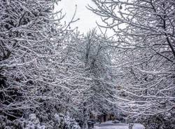 La neve dei lettori 13 gennaio 2017