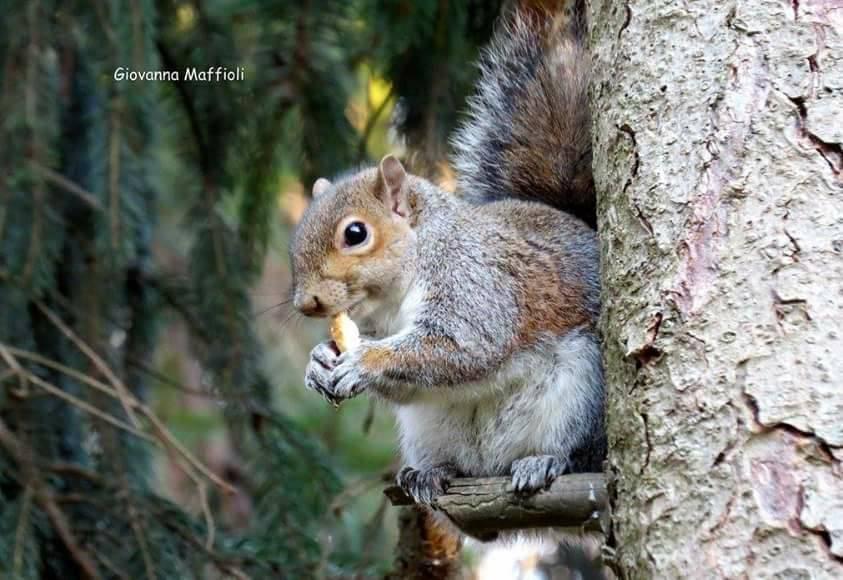 Lo scoiattolo al parco