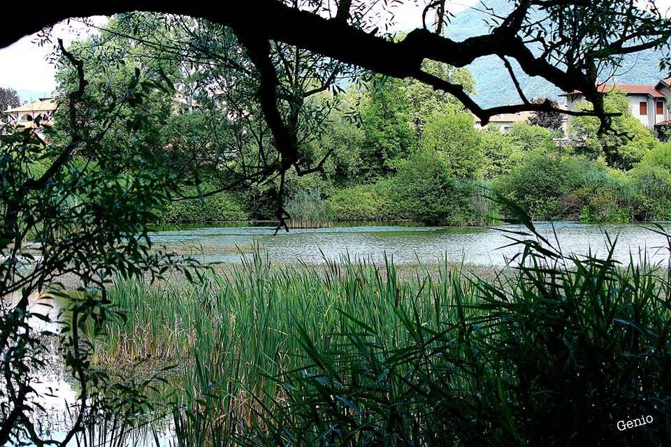 Il laghetto Cicogna ad Arcisate - foto di Eugenio Pigato