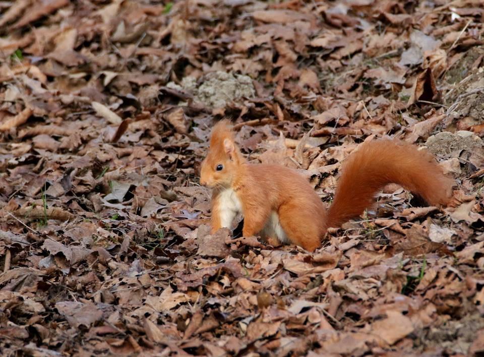 Lo scoiattolo di Parco Zanzi