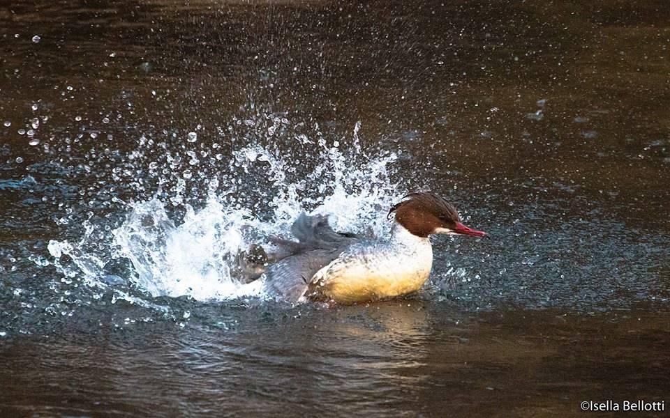 Lo smerigo al lago (foto di Isella Belotti)