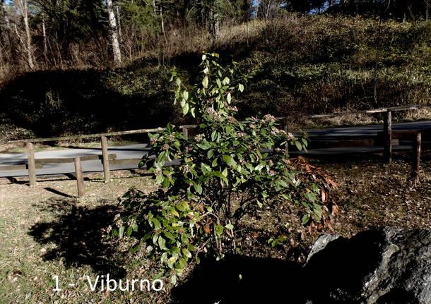 La Vanessa atalanta: alla scoperta di fiori e piante