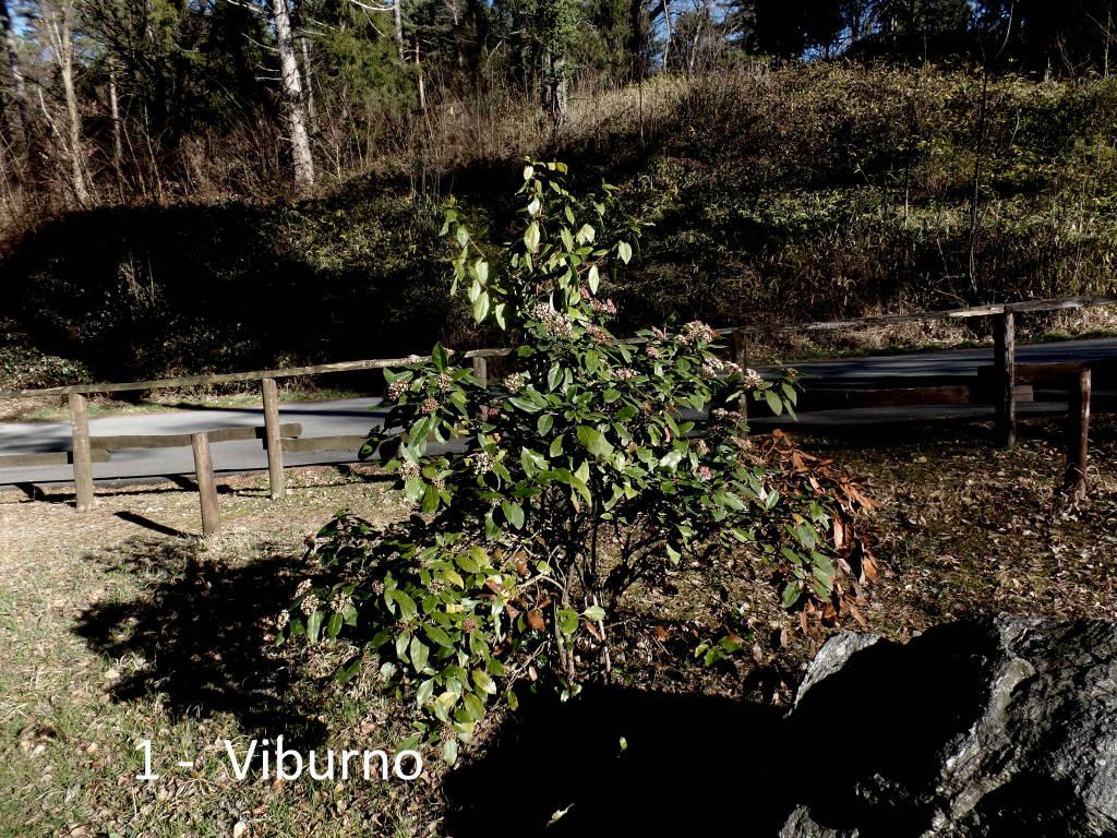 Teresio Colombo e le piante del Poggio e del Villaggio Cagnola
