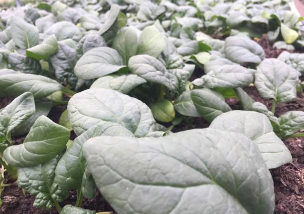 Al Pradaccio il futuro mercatino delle conserve bio