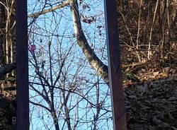 specchio boschi
