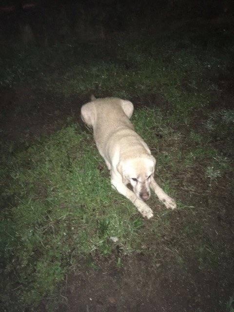 cane smarrito magnago
