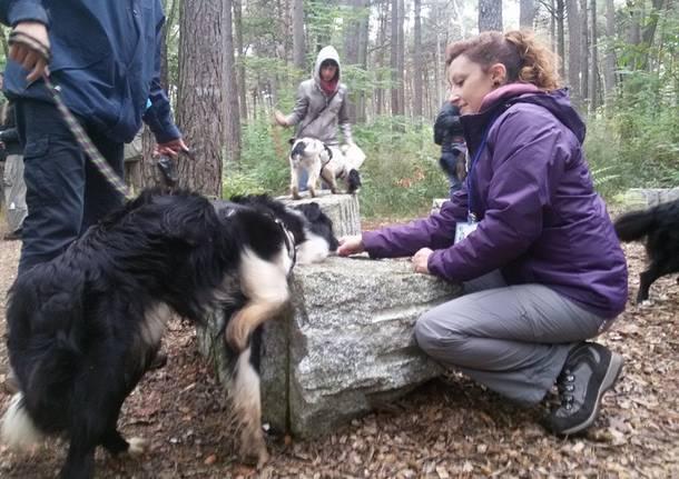 Cani nel Parco Pineta