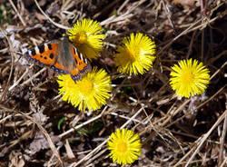 Risvegli di primavera1