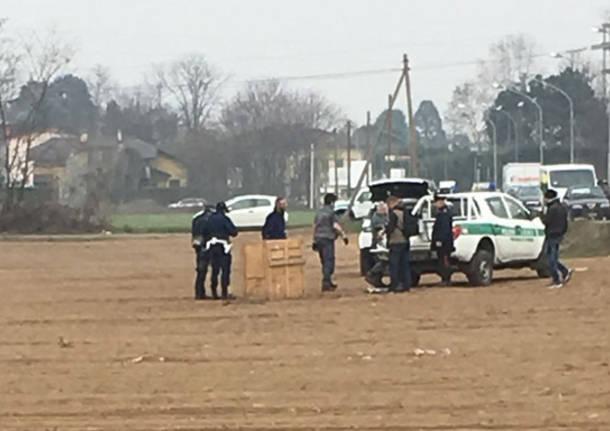 cattura cinghiale polizia locale busto arsizio