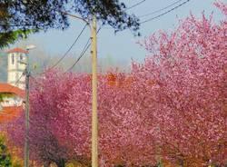 Esplosione di rosa
