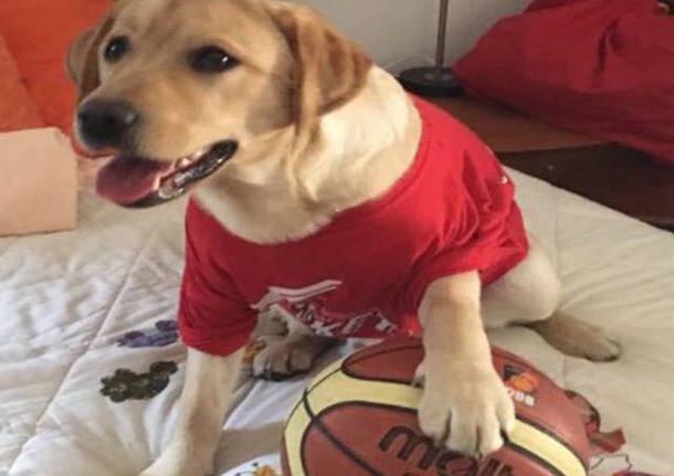joy cane biancorosso pallacanestro varese