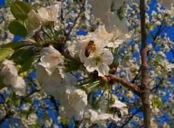 La primavera di Antonio Kawasaki