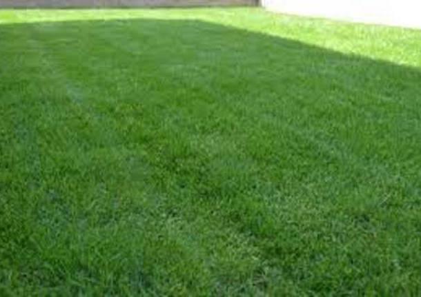 Elegant avere un giardino e non dovere fare nulla per - Giardino senza erba ...