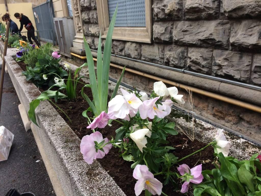 Guerrilla gardening per salvare le aiuole della città