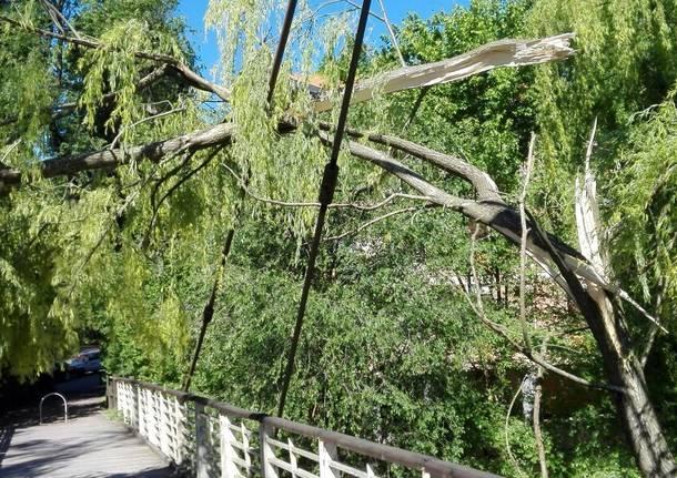 Vento ultimi danni: vetrata in frantumi a scuola, albero sul ponte del Lura