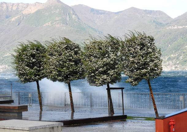 Vento forte, interventi per alberi e rami caduti