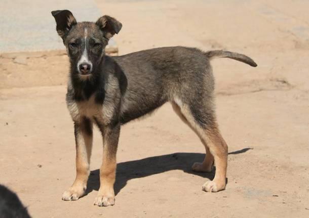 Cinque orfanelle cucciole in cerca di famiglia