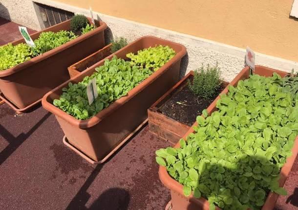 asilo luvinate verdura