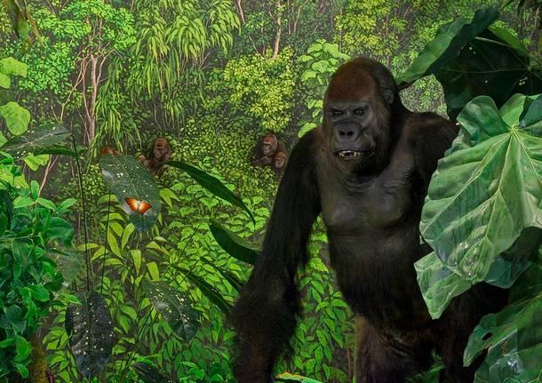 Storia naturale al museo per vivere la foresta pluviale - Gli animali della foresta pluviale di daintree ...