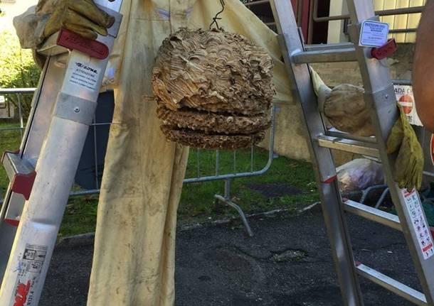 nidi di vespe e calabroni, ecco chi chiamare