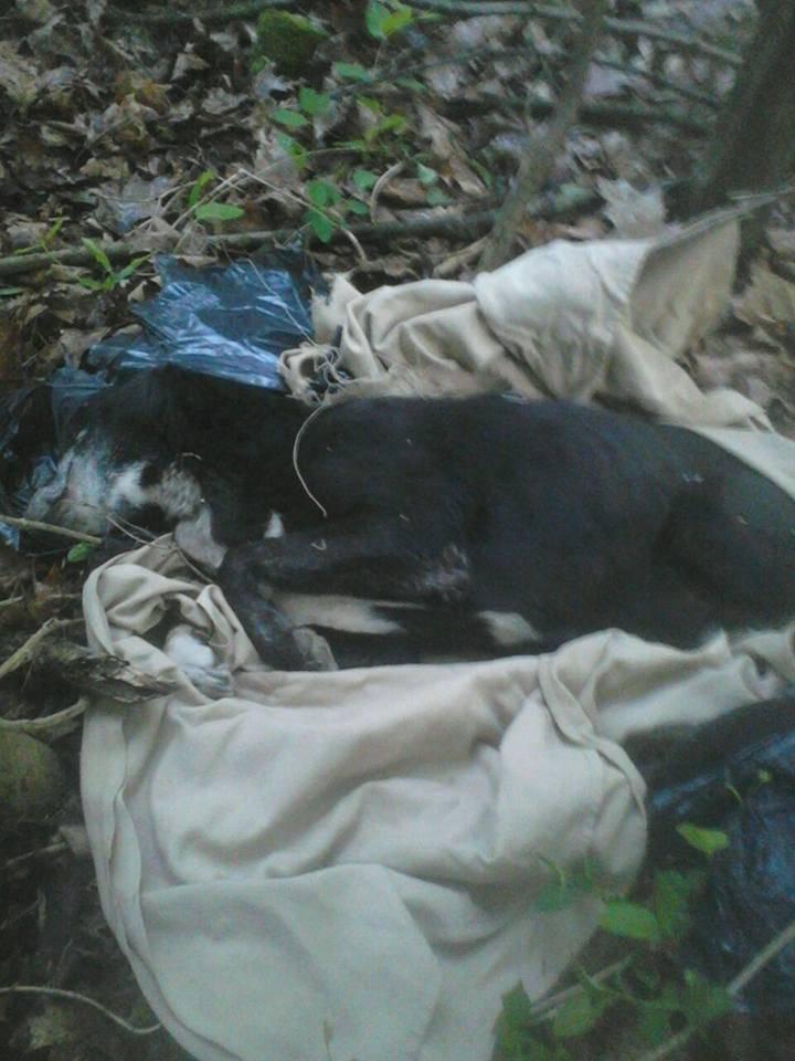 Nei sacchi abbandonati anche un cane morto