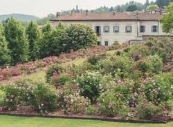 Il roseto di Villa Della Porta Bozzolo