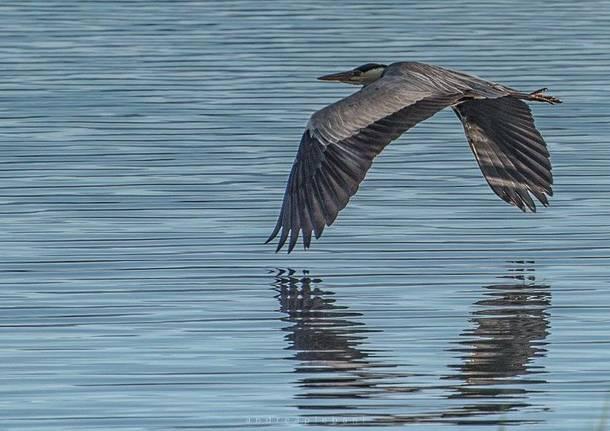 Il volo - foto di Andrea Plebani