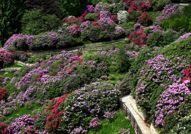 Una passeggiata nei sentieri o tra i rododendri in fiore 77dc1c77ff6