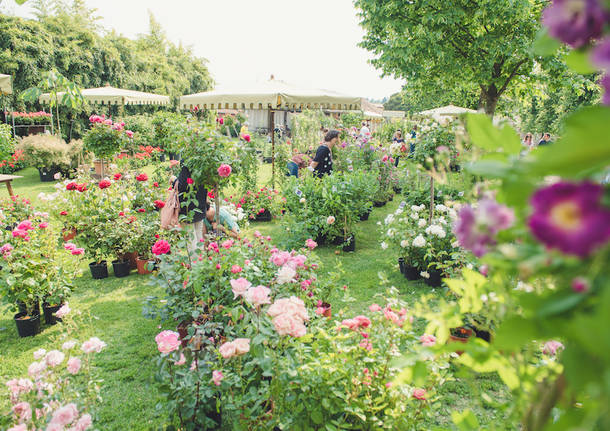 Una mostra mercato dedicata alla regina dei fiori - Mostra della porta ...