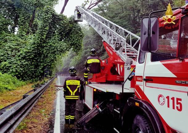 Maltempo, tagli piante dei vigili del fuoco