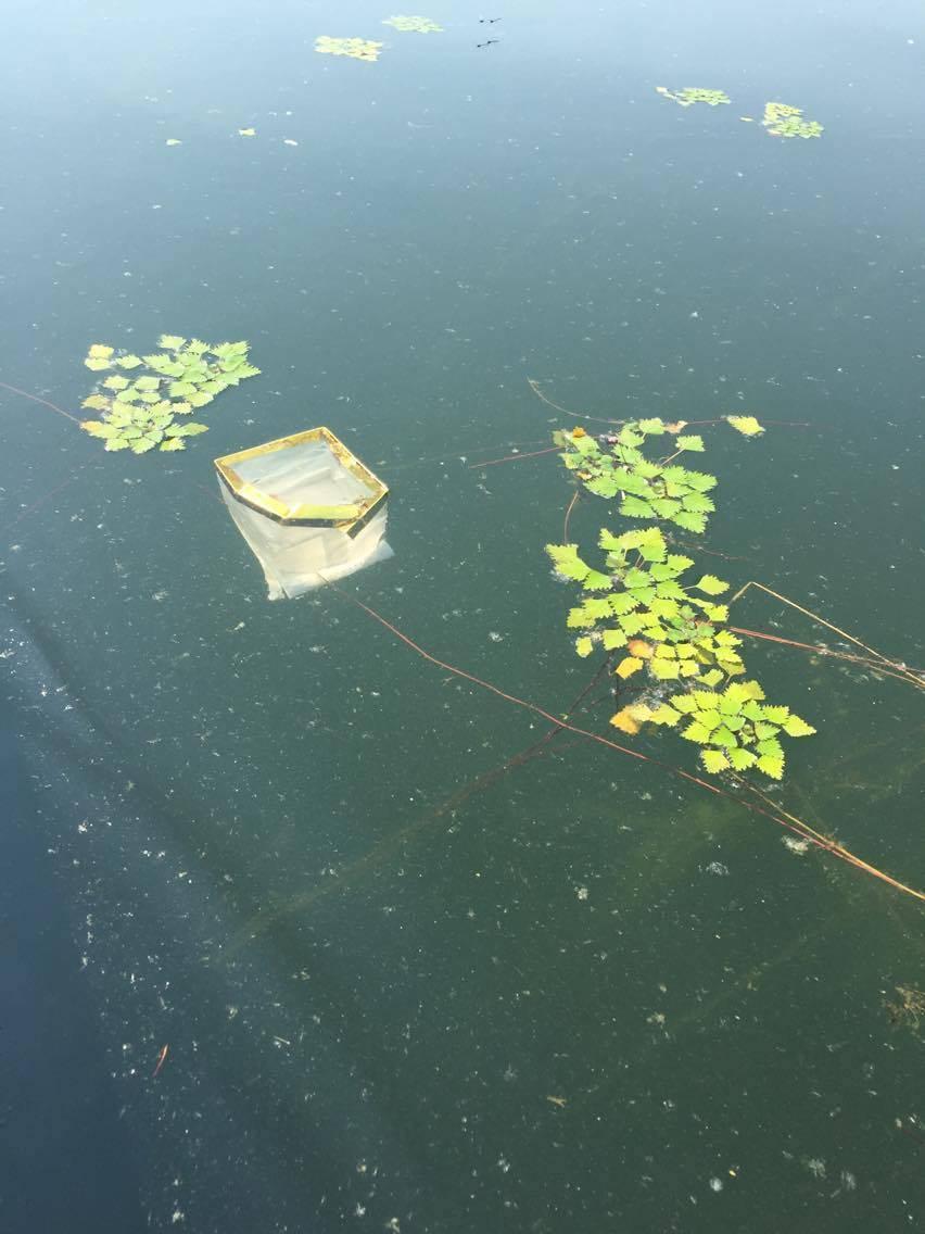 Lanterne disperse nel lago