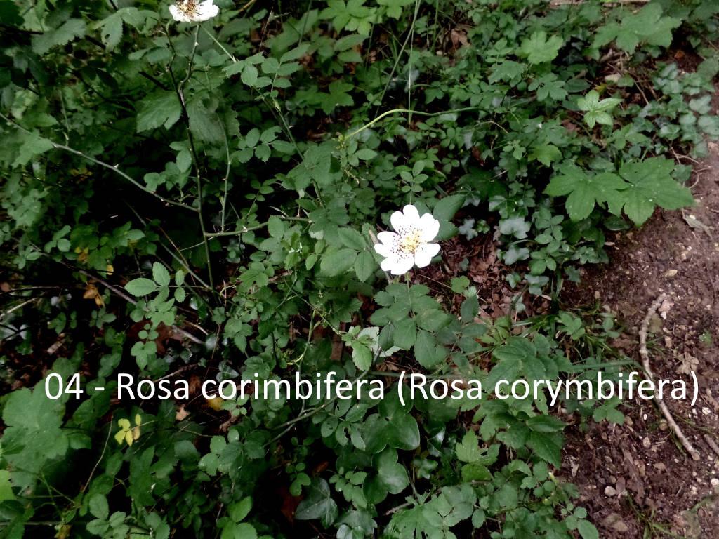 Teresio Colombo escursione 18 giugno