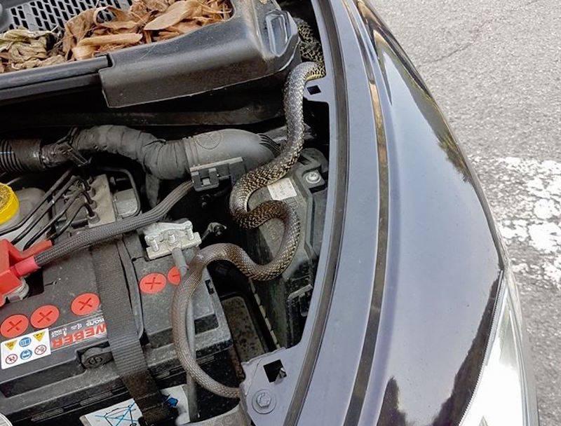 Il serpente nella macchina