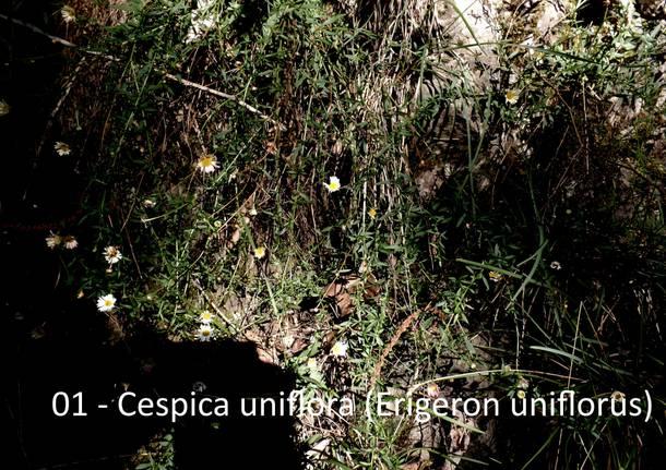 Le escursioni di Teresio: Villaggio Cagnola