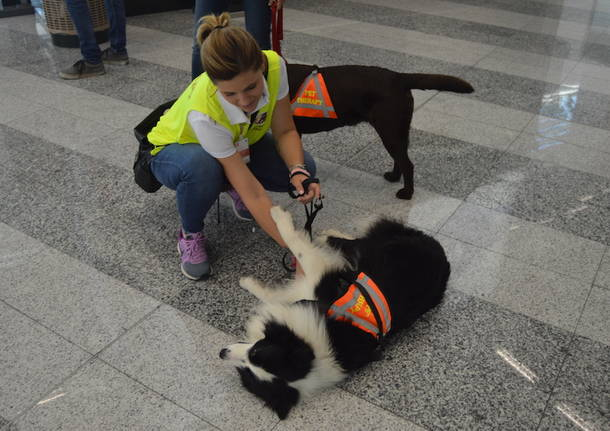 Pet therapy a Malpensa