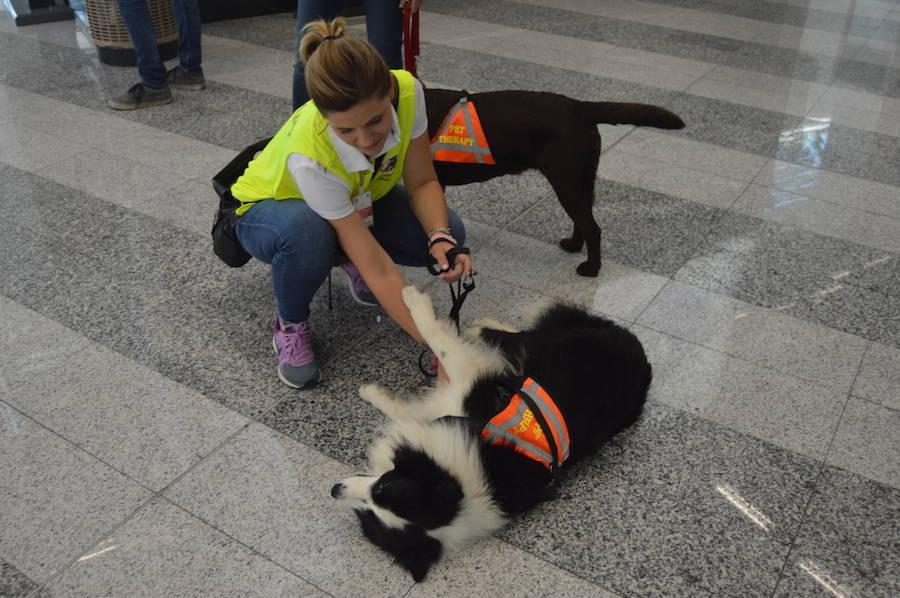 Pet therapy a Malpensa