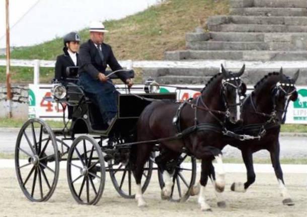 jozsef dibak equitazione pariglia