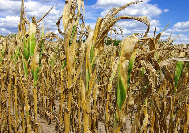 L'Italia a secco per la siccità: stato di calamità per 10 Regioni