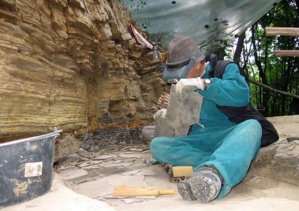 Monte San Giorgio Museo fossili Meride