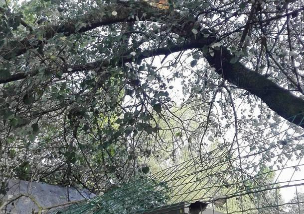 Maltempo, danni al canile di Varese